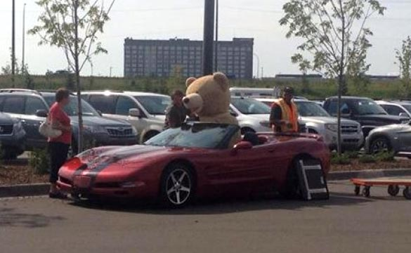 [PICS] Man Struggles to a Fit Giant Stuffed Bear in his C5 Corvette Convertible