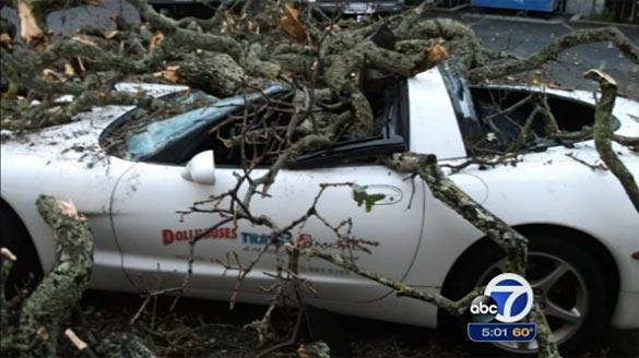 [VIDEO] Storm Damaged Tree Falls on a C5 Corvette in California