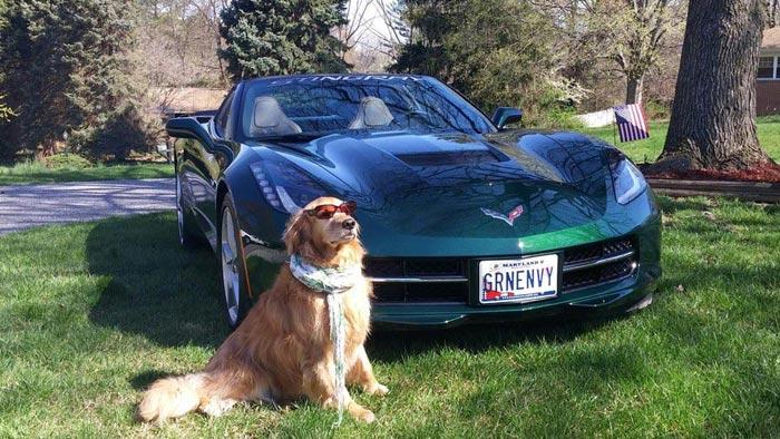 [GALLERY] Corvettes and Pets (50 Corvette photos)