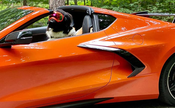 [PICS] Oaklie the Newfie Loves His Master's 2020 Corvette