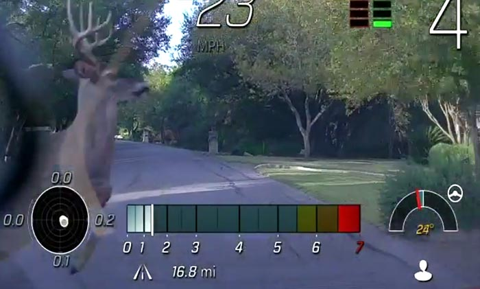 [VIDEO] 2020 Corvette Owner's Close Encounter with a Deer
