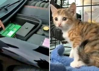 Kitten Goes for 180-Mile Ride Under the Hood of a C5 Corvette
