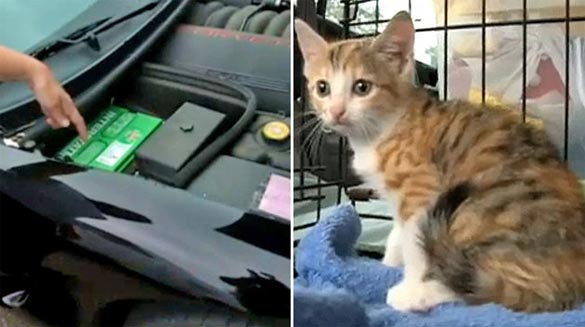Kitten Goes for 180-Mile Ride Under the Hood of a C5 Corvette