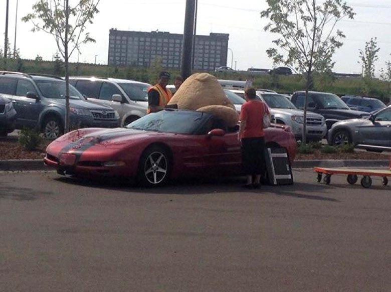 [PICS] Man Struggles to Fit a Giant Stuffed Bear in his C5 Corvette Convertible