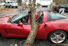[ACCIDENT] Tree Crashes Down on a 2005 Corvette in Ohio