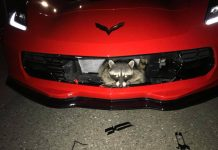 [ACCIDENT] Rocky Raccoon Hitches a Ride in a Corvette Stingray