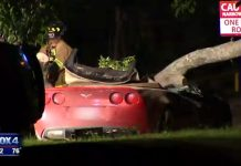 [ACCIDENT] Texas Corvette Driver is Killed After Tree Falls on Car